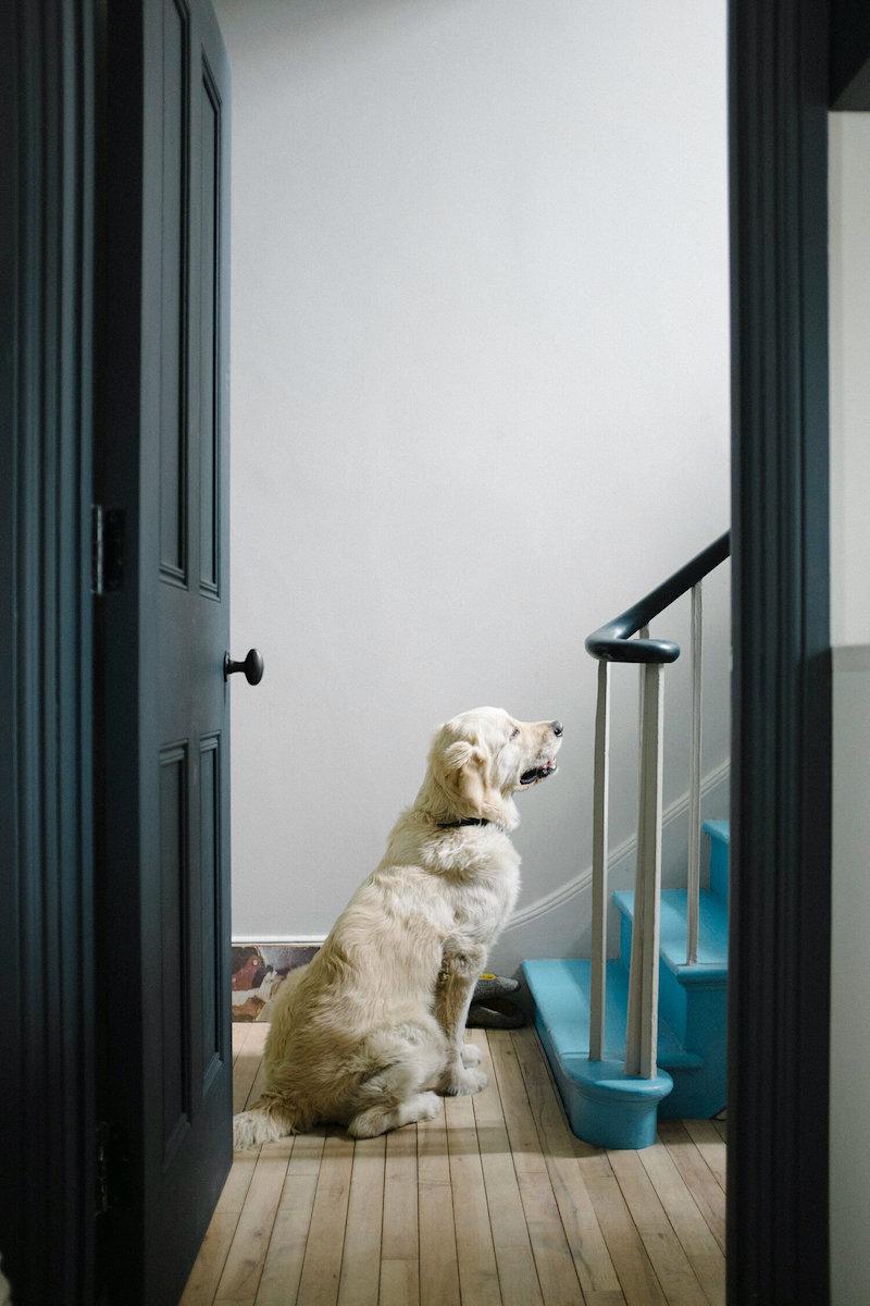 Mornington Terrace - dog matches floor
