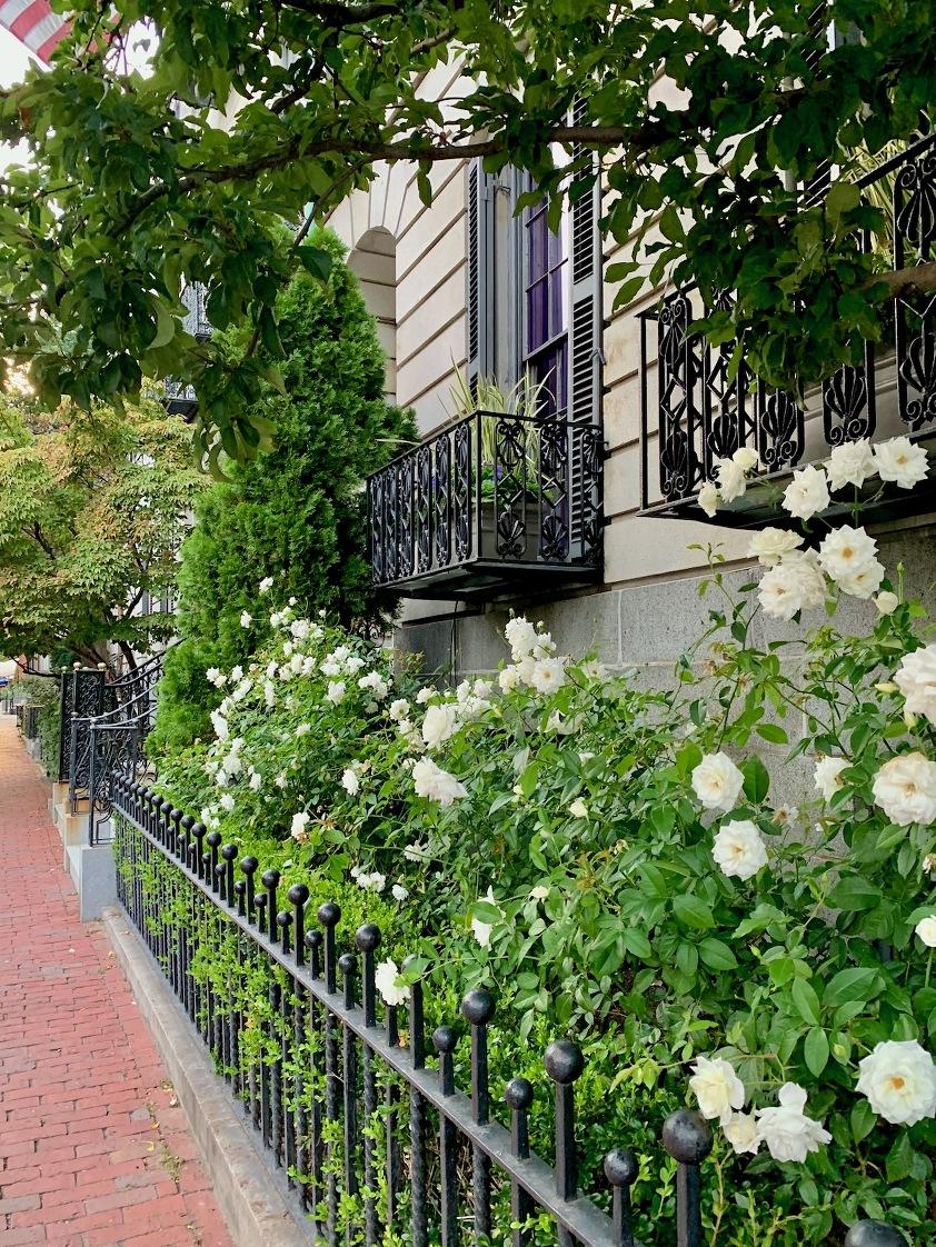 Gorgeous Beacon Street - Boston - white roses